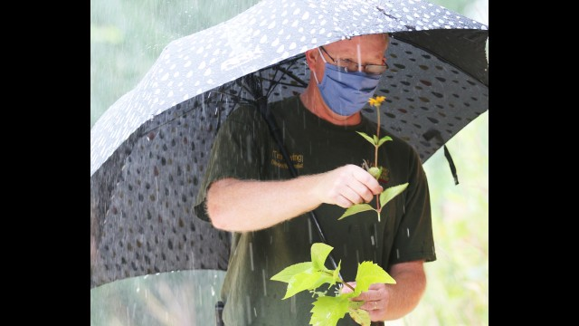 """Tim Ewing holds a """"susan"""" specimen near the building of the Navarino Nature Center. The nature center hosted a prairie plant tour, despite a morning of showers."""