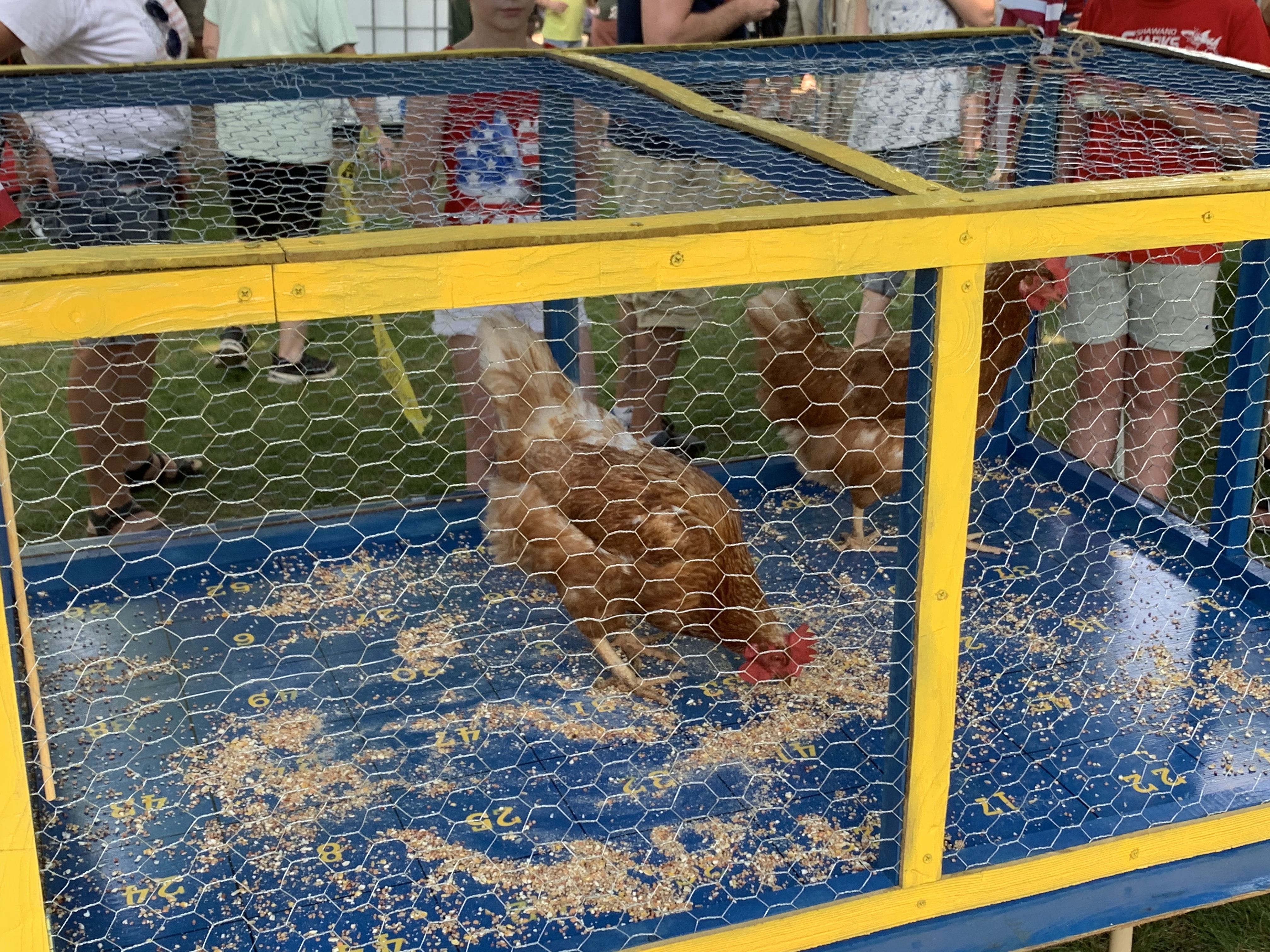 Chicken poop bingo was a popular attraction for visitors as chickens were fed in anticipation of what number the droppings would land on, in Village Park in Bonduel on July 4.Luke Reimer   NEW Media
