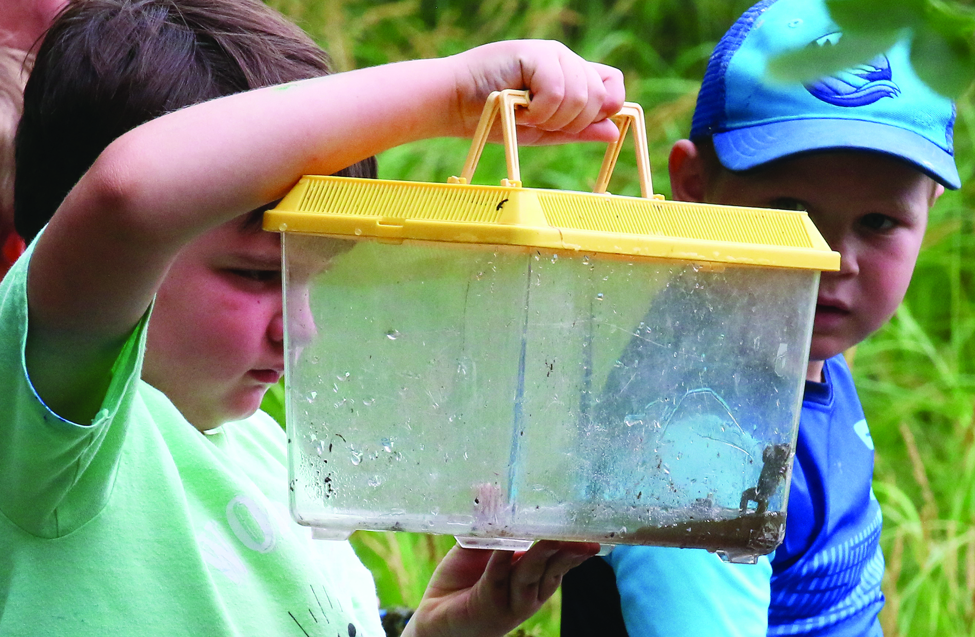 Matthew Briggs holds a container of frogs as Jeremiah Hodges looks on. The four boys at the camp learned about the life cycle of frogs and other aquatic creatures as they explored a swampy area of the Navarino Nature Center.Carol Ryczek   NEW Media