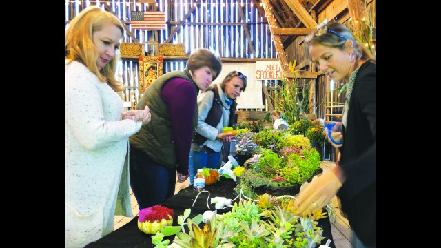 Owner Karen Schairer, right, demonstrates to guests how to create their own take-home pumpkin decorations with a variety of succulents. Guests enjoying a girls night out are, from left, Nicole Melander, Wausau, Megan Olson, Birnamwood, and Cori Soukup, Hatley. The Thursday night event, Sips & Succulents, will take place through Oct. 8 at Schairer's Autumn Acres in Birnamwood.